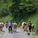 Pays Basque a vélo 7J/6N